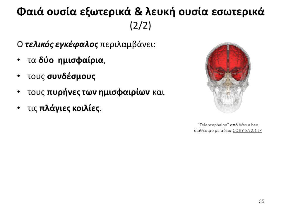 Ο τελικός εγκέφαλος περιλαμβάνει: τα δύο ημισφαίρια, τους συνδέσμους τους πυρήνες των ημισφαιρίων και τις πλάγιες κοιλίες. Φαιά ουσία εξωτερικά & λευκ