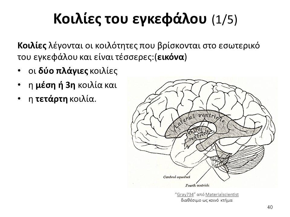 Κοιλίες του εγκεφάλου (1/5) Κοιλίες λέγονται οι κοιλότητες που βρίσκονται στο εσωτερικό του εγκεφάλου και είναι τέσσερες:(εικόνα) οι δύο πλάγιες κοιλί