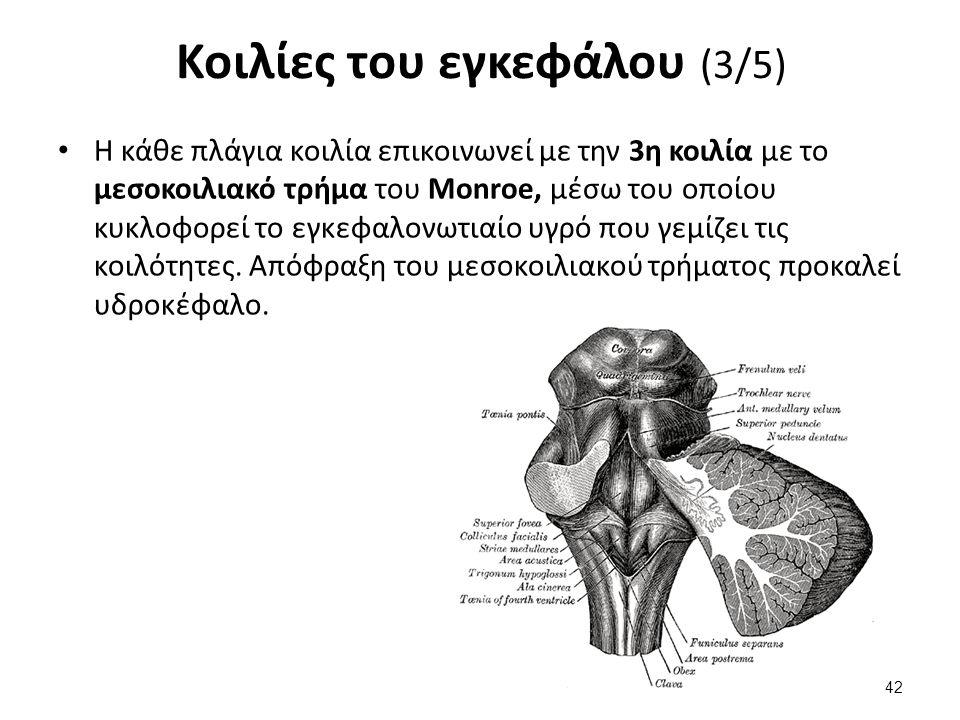 Κοιλίες του εγκεφάλου (3/5) Η κάθε πλάγια κοιλία επικοινωνεί με την 3η κοιλία με το μεσοκοιλιακό τρήμα του Μοnroe, μέσω του οποίου κυκλοφορεί το εγκεφ