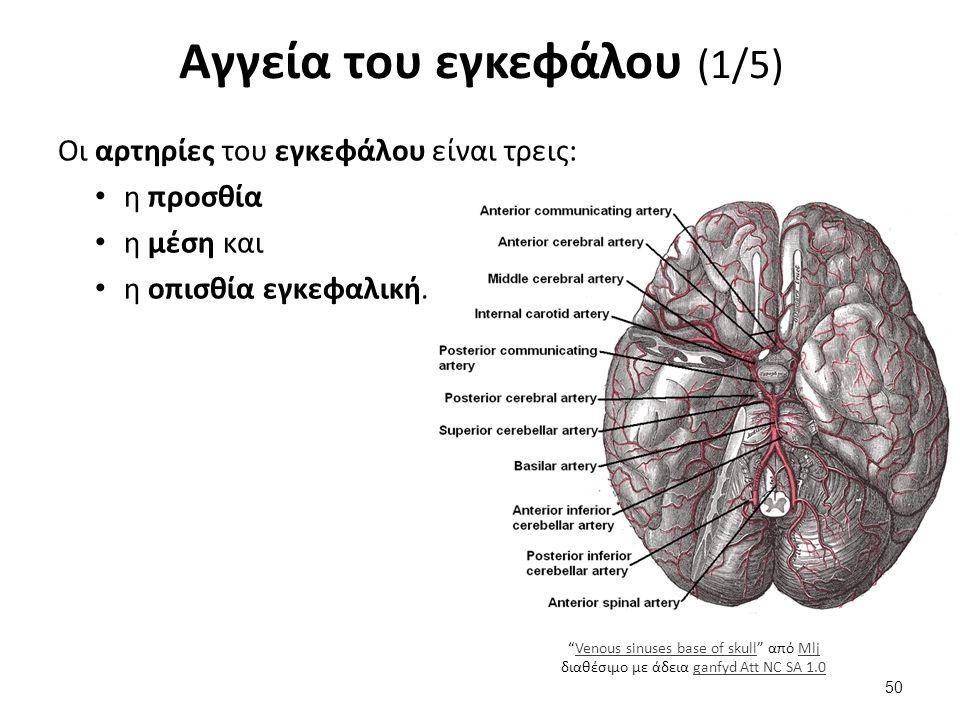 """Αγγεία του εγκεφάλου (1/5) Οι αρτηρίες του εγκεφάλου είναι τρεις: η προσθία η μέση και η οπισθία εγκεφαλική. """"Venous sinuses base of skull"""" από Mlj δι"""