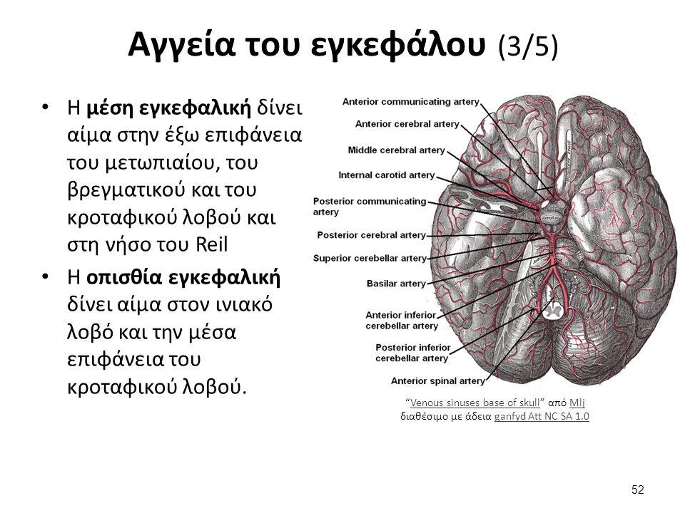 Αγγεία του εγκεφάλου (3/5) Η μέση εγκεφαλική δίνει αίμα στην έξω επιφάνεια του μετωπιαίου, του βρεγματικού και του κροταφικού λοβού και στη νήσο του R