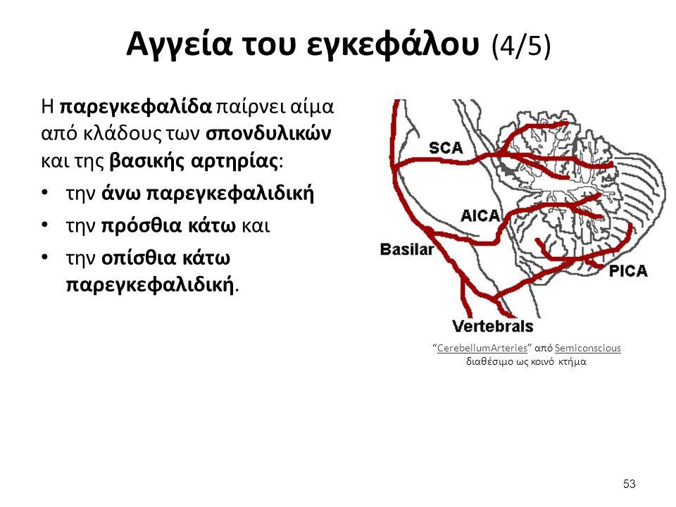 Αγγεία του εγκεφάλου (4/5) Η παρεγκεφαλίδα παίρνει αίμα από κλάδους των σπονδυλικών και της βασικής αρτηρίας: την άνω παρεγκεφαλιδική την πρόσθια κάτω