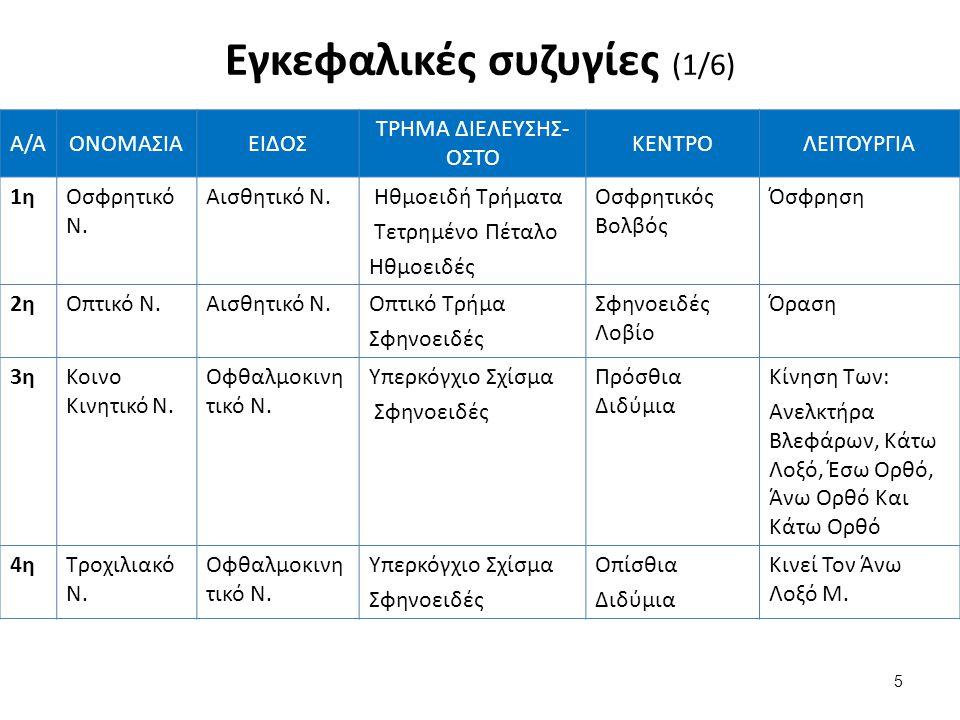 Φλεβώδεις κόλποι (2/2) Οι κόλποι της βάσης του κρανίου είναι 5: – εγκάρσιος – σηραγγώδης – ινιακός – άνω λιθοειδής, και – κάτω λιθοειδής Οι κόλποι επικοινωνούν μεταξύ τους και το φλεβικό αίμα του εγκεφάλου τελικά από τον σιγμοειδή κόλπο που είναι η συνέχεια του εγκάρσιου παροχετεύεται στην έσω σφαγίτιδα φλέβα.