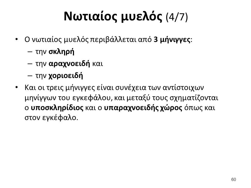 Νωτιαίος μυελός (4/7) Ο νωτιαίος μυελός περιβάλλεται από 3 μήνιγγες: – την σκληρή – την αραχνοειδή και – την χοριοειδή Και οι τρεις μήνιγγες είναι συν