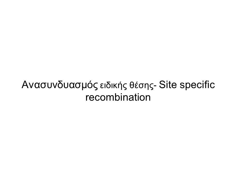 Aνασυνδυασμός σε ειδική θέση-Site specific recombination (προκαρυωτικά + ευκαρυωτικά κύτταρα ) Ο ομόλογος ανασυνδυασμός γίνεται τυχαία μεταξύ 2 ομόλογων τμημάτων DNA και υπάρχει σχετικά μικρή ειδικότητα ως προς το σημείο του επιχιασμού Στον ειδικό ανασυνδυασμό σχετικά μικρές, μοναδικές νουκλεοτιδικές αλληλουχίες σε δύο μόρια DNA αναγνωρίζονται από ένζυμα που λέγονται ρεκομπινάσες (recombinases) που αναγνωρίζουν, κόβουν και ανασυνδυάζουν τις αλληλουχίες αυτές σε δύο διαφορετικά μόρια DNA.