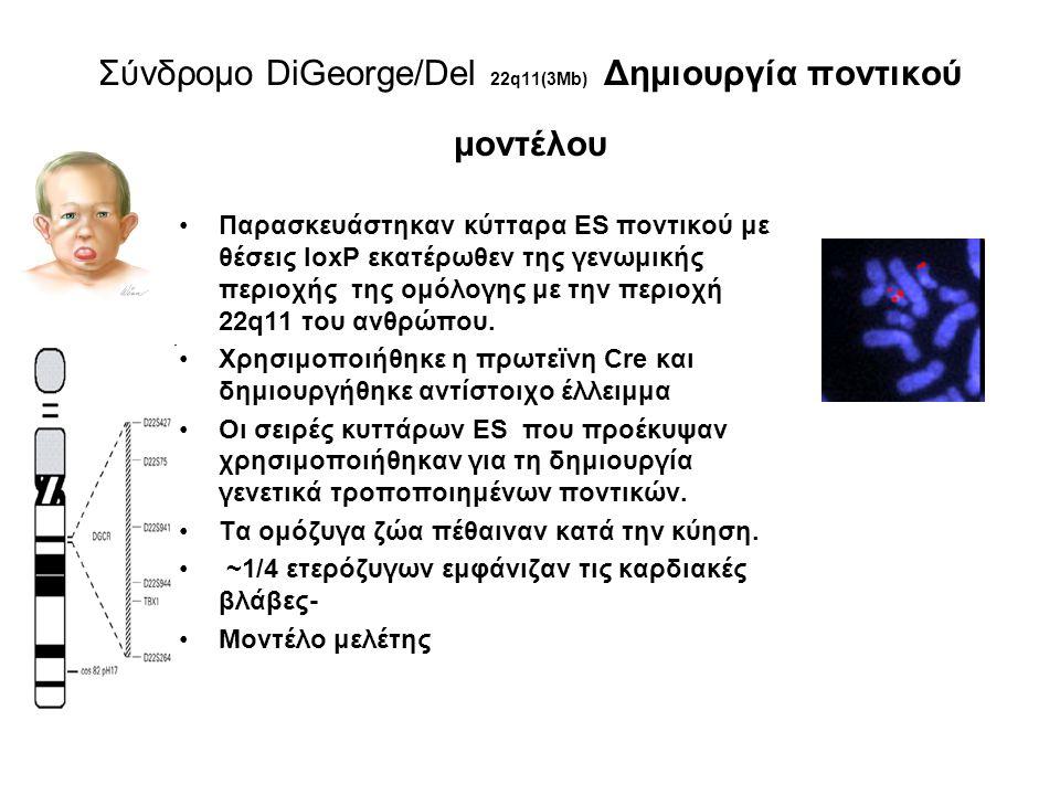 Παράδειγμα: Κυστική ίνωση Γενετικό νόσημα Χρησιμοποιώντας το κλωνοποιημένο wild-type ανθρώπινο CFTR απομονώθηκε το ομόλογο cftr στο οποίο εισήχθησαν μεταλλάξεις (knockout) ομόζυγα μεταλλαγμένα ποντίκια με φαινότυπο CF χρησιμοποιούνται σαν μοντέλο για τη μελέτη και γονιδιακή θεραπεία του νοσήματος
