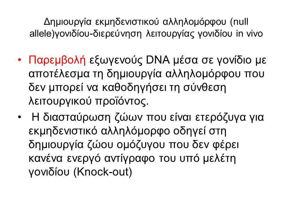 Γονιδιακή στόχευση = ελεγχόμενη εισαγωγή συγκεκριμένων τροποποιήσεων σε συγκεκριμένο γενετικό τόπο Η γονιδιακή στόχευση χρησιμοποιείται -για την απενεργοποίηση γονιδίων μέσω ομόλογου ανασυνδυασμού (στοχευμένη αδρανοποίηση(gene knock- out) -για την αντικατάσταση ενδογενούς γονιδίου από εξωγενές.