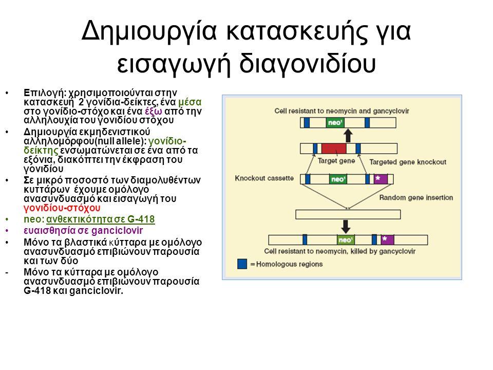 Στοχευμένη αδρανοποίηση (Knock- out) neo r(εντός ομόλογης περιοχής) : αντίσταση σε G-418 tk HSV : γονίδιο ο κινάσης της θυμιδίνης του herpes simplex virus.