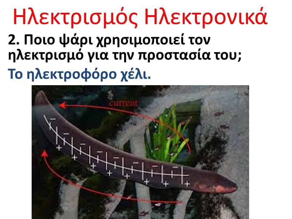 Ηλεκτρισμός Ηλεκτρονικά 2. Ποιο ψάρι χρησιμοποιεί τον ηλεκτρισμό για την προστασία του; Το ηλεκτροφόρο χέλι.