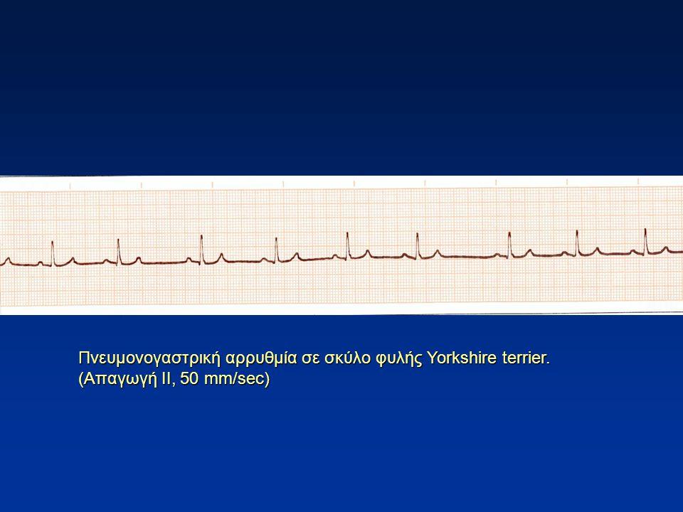 Πνευμονογαστρική αρρυθμία σε σκύλο φυλής Yorkshire terrier. (Απαγωγή ΙΙ, 50 mm/sec)