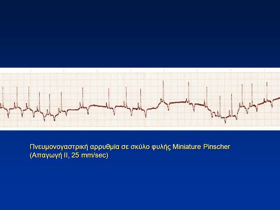 Πνευμονογαστρική αρρυθμία σε σκύλο φυλής Miniature Pinscher (Απαγωγή ΙΙ, 25 mm/sec)
