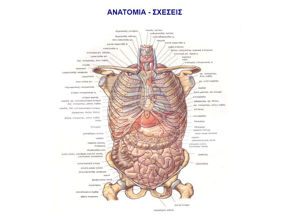Κακώσεις μεσοθωρακίου Ορισμός: -χώρος που αφορίζεται μεταξύ των πνευμόνων -περιλαμβάνει: την καρδιά, την τραχεία και τους βρόγχους, τον οισοφάγο, το θύμο αδένα, τα μεγάλα αγγεία Μεσοθωράκιο