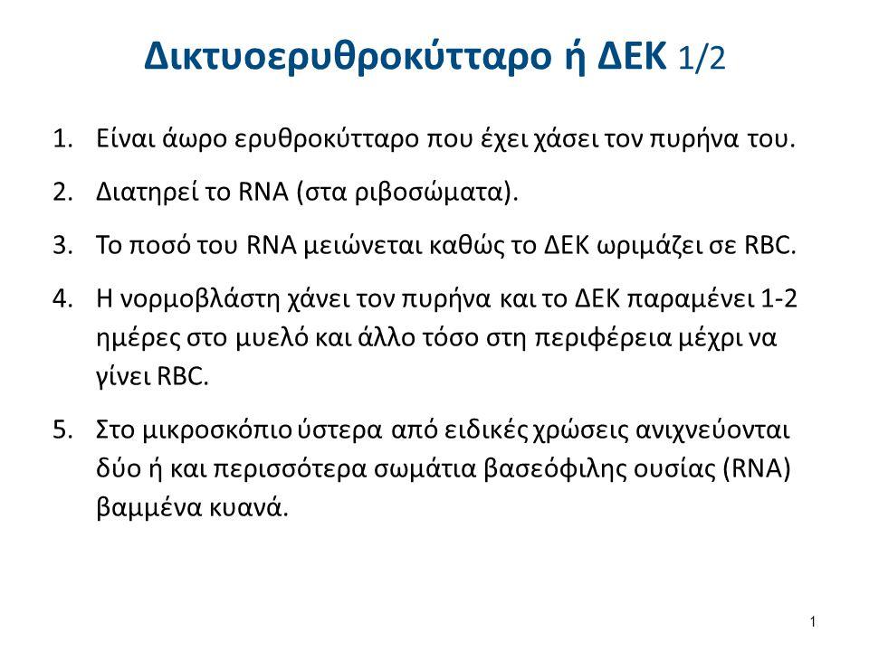 Δικτυοερυθροκύτταρο ή ΔΕΚ 1/2 1.Είναι άωρο ερυθροκύτταρο που έχει χάσει τον πυρήνα του. 2.Διατηρεί το RNA (στα ριβοσώματα). 3.Το ποσό του RNA μειώνετα