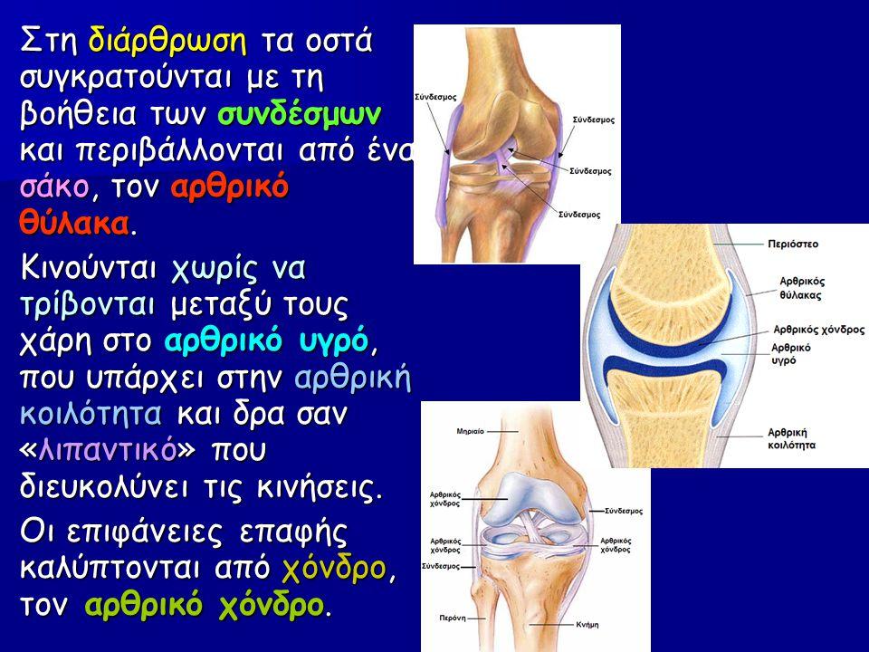 Στη διάρθρωση τα οστά συγκρατούνται με τη βοήθεια των συνδέσμων και περιβάλλονται από ένα σάκο, τον αρθρικό θύλακα. Κινούνται χωρίς να τρίβονται μεταξ