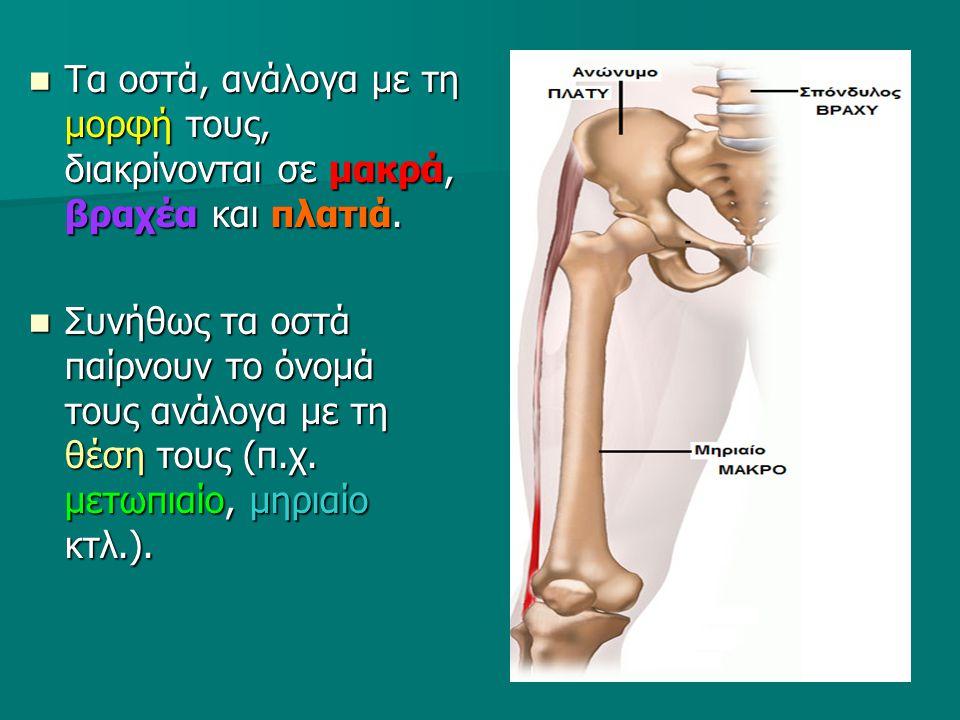 Τα οστά, ανάλογα με τη μορφή τους, διακρίνονται σε μακρά, βραχέα και πλατιά. Τα οστά, ανάλογα με τη μορφή τους, διακρίνονται σε μακρά, βραχέα και πλατ