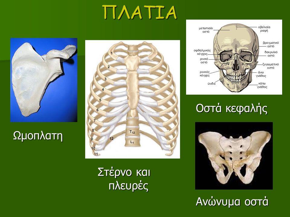 ΠΛΑΤΙΑ Οστά κεφαλής Στέρνο και πλευρές Ανώνυμα οστά Ωμοπλατη