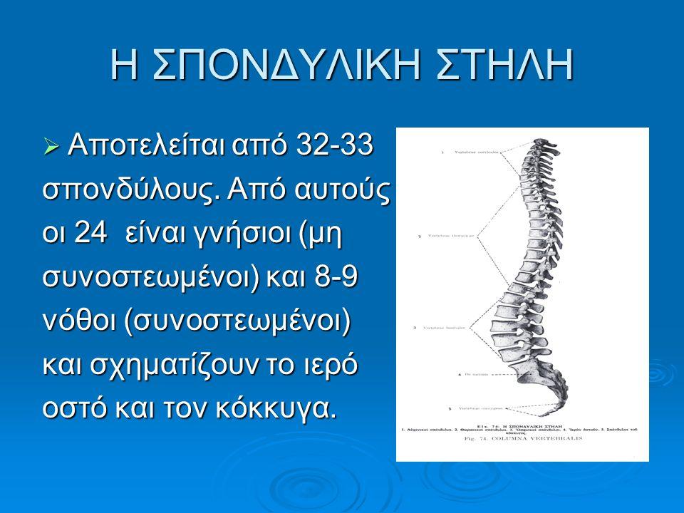 Η ΣΠΟΝΔΥΛΙΚΗ ΣΤΗΛΗ  Αποτελείται από 32-33 σπονδύλους. Από αυτούς οι 24 είναι γνήσιοι (μη συνοστεωμένοι) και 8-9 νόθοι (συνοστεωμένοι) και σχηματίζουν