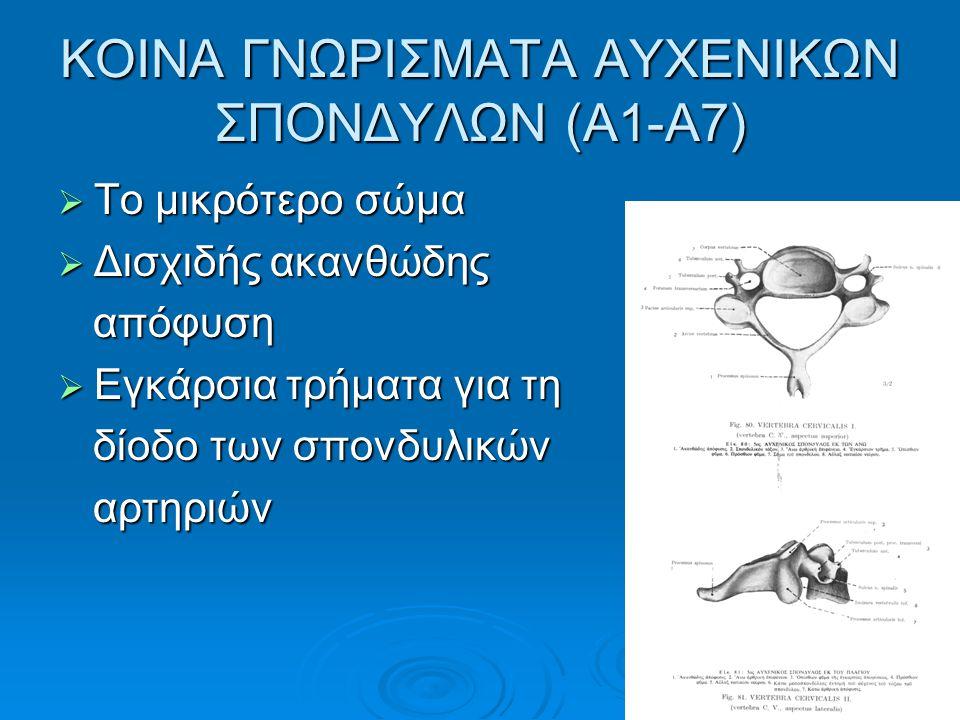 ΚΟΙΝΑ ΓΝΩΡΙΣΜΑΤΑ ΑΥΧΕΝΙΚΩΝ ΣΠΟΝΔΥΛΩΝ (Α1-Α7)  Το μικρότερο σώμα  Δισχιδής ακανθώδης απόφυση απόφυση  Εγκάρσια τρήματα για τη δίοδο των σπονδυλικών δίοδο των σπονδυλικών αρτηριών αρτηριών