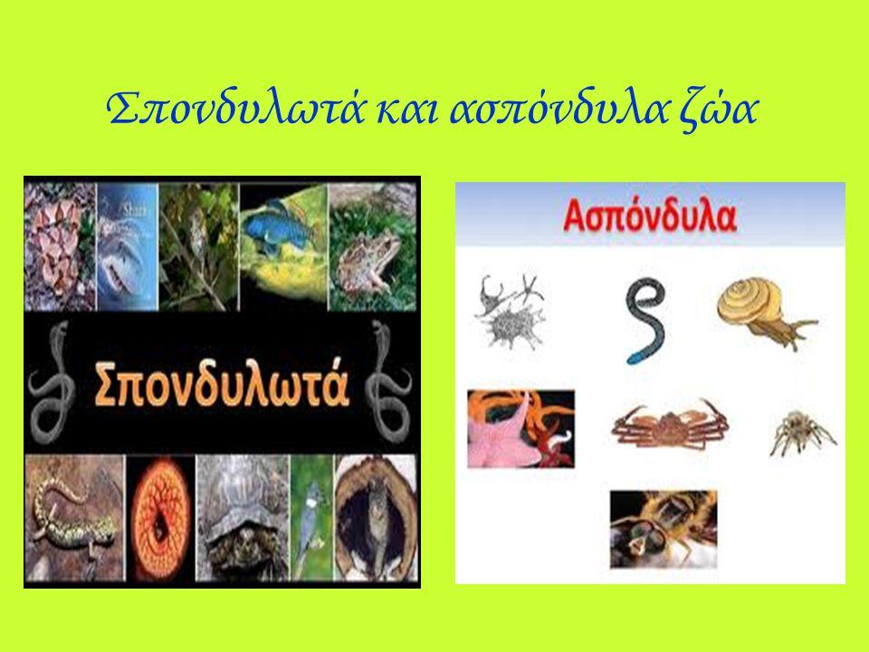 Σπονδυλωτά ονομάζονται τα ζώα που έχουν σπονδυλική στήλη και κόκαλα, ενώ ασπόνδυλα λέγονται εκείνα που δεν έχουν ούτε σπονδυλική στήλη ούτε κοκάλα.