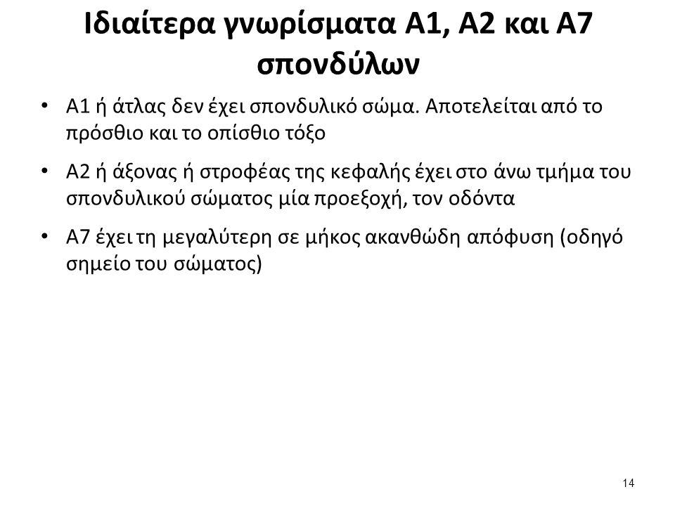 Ιδιαίτερα γνωρίσματα Α1, Α2 και Α7 σπονδύλων Α1 ή άτλας δεν έχει σπονδυλικό σώμα. Αποτελείται από το πρόσθιο και το οπίσθιο τόξο Α2 ή άξονας ή στροφέα
