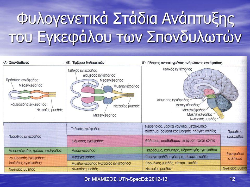 Φυλογενετικά Στάδια Ανάπτυξης του Εγκεφάλου των Σπονδυλωτών Dr. ΜΙΧΜΙΖΟΣ, UTh-SpecEd: 2012-13 12