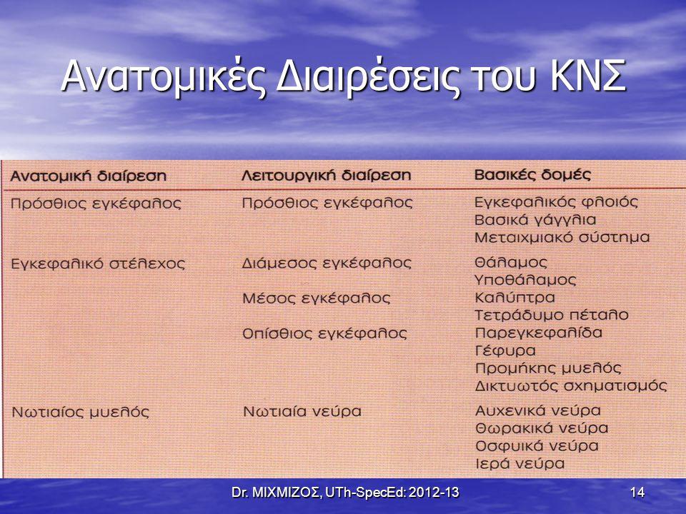 Ανατομικές Διαιρέσεις του ΚΝΣ Dr. ΜΙΧΜΙΖΟΣ, UTh-SpecEd: 2012-13 14