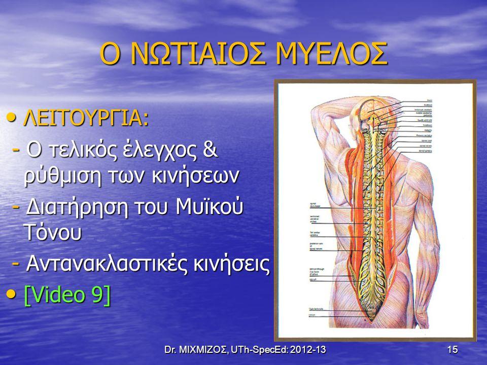Ο ΝΩΤΙΑΙΟΣ ΜΥΕΛΟΣ ΛΕΙΤΟΥΡΓΙΑ: ΛΕΙΤΟΥΡΓΙΑ: - Ο τελικός έλεγχος & ρύθμιση των κινήσεων - Ο τελικός έλεγχος & ρύθμιση των κινήσεων - Διατήρηση του Μυϊκού
