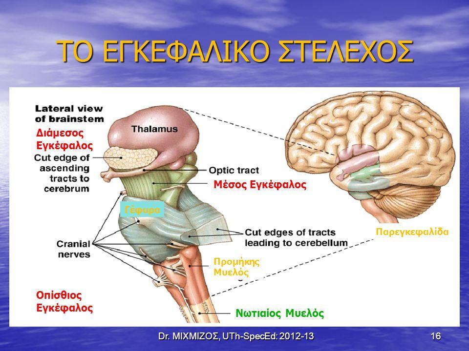 ΤΟ ΕΓΚΕΦΑΛΙΚΟ ΣΤΕΛΕΧΟΣ Dr. ΜΙΧΜΙΖΟΣ, UTh-SpecEd: 2012-13 16 Διάμεσος Εγκέφαλος Μέσος Εγκέφαλος Οπίσθιος Εγκέφαλος Νωτιαίος Μυελός Προμήκης Μυελός Γέφυ