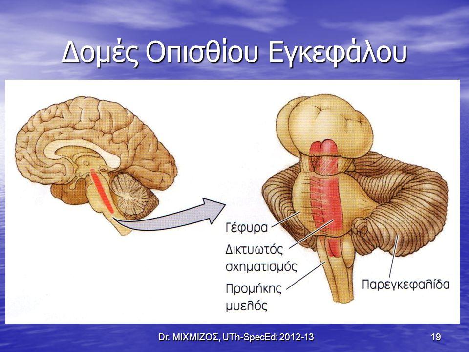 Δομές Οπισθίου Εγκεφάλου Dr. ΜΙΧΜΙΖΟΣ, UTh-SpecEd: 2012-13 19
