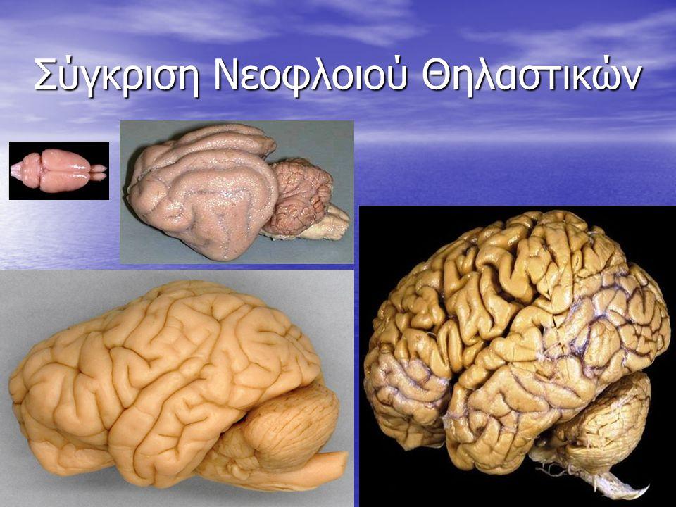 Σύγκριση Νεοφλοιού Θηλαστικών 39