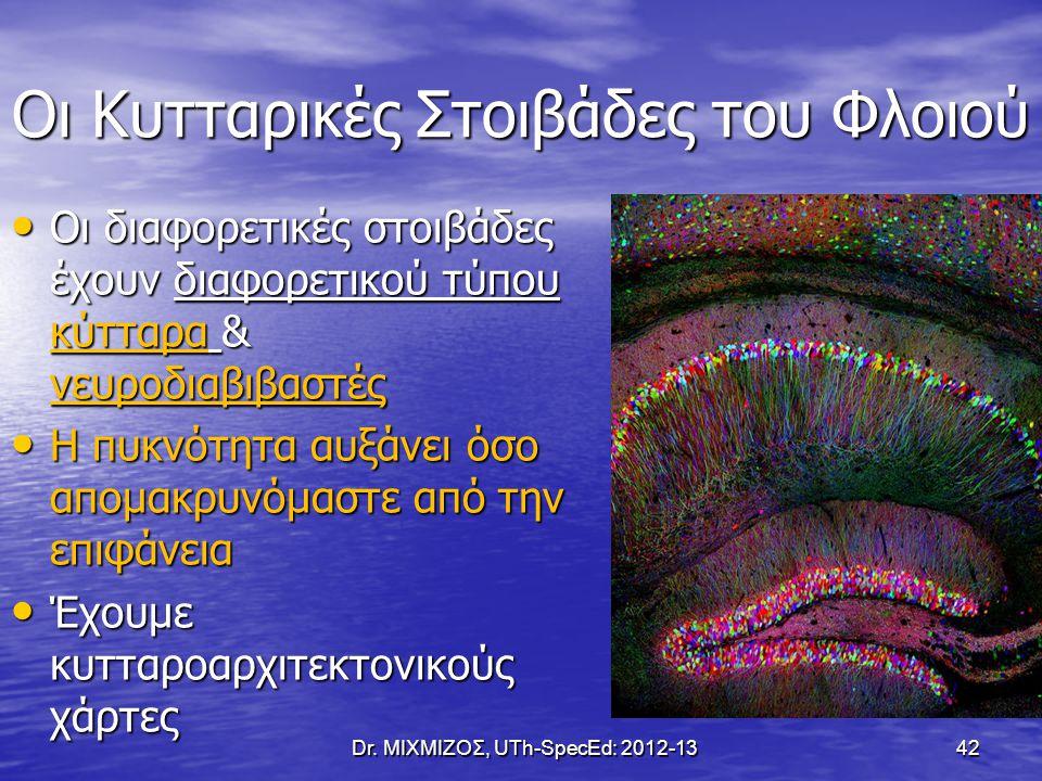 Οι Κυτταρικές Στοιβάδες του Φλοιού Dr. ΜΙΧΜΙΖΟΣ, UTh-SpecEd: 2012-13 42 Οι διαφορετικές στοιβάδες έχουν διαφορετικού τύπου κύτταρα & νευροδιαβιβαστές