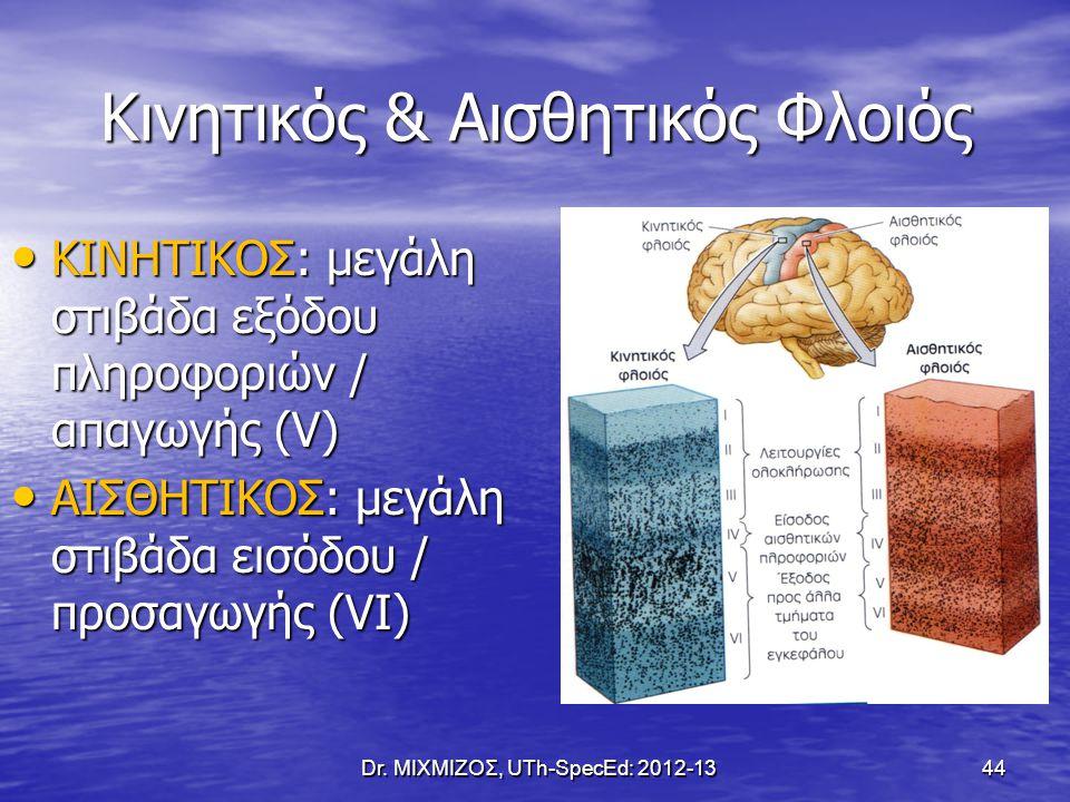 Κινητικός & Αισθητικός Φλοιός Dr. ΜΙΧΜΙΖΟΣ, UTh-SpecEd: 2012-13 44 ΚΙΝΗΤΙΚΟΣ: μεγάλη στιβάδα εξόδου πληροφοριών / απαγωγής (V) ΚΙΝΗΤΙΚΟΣ: μεγάλη στιβά