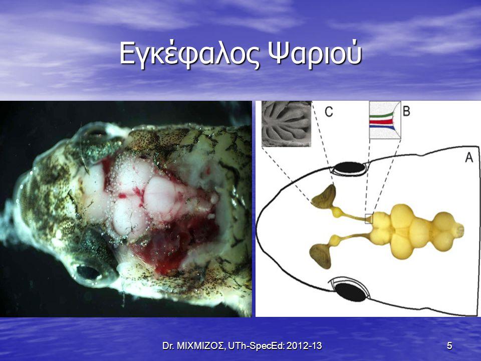 Χωρίζεται σε Συμπαθητικό (+) & Παρασυμπαθητικό (-) Χωρίζεται σε Συμπαθητικό (+) & Παρασυμπαθητικό (-) Ελέγχει την αντίδραση πάλη ή φυγή Ελέγχει την αντίδραση πάλη ή φυγή Ξεκινά από τις Θωρακικές & Οσφυϊκές μοίρες αλλά: ελέγχει τα όργανα-στόχους μέσω γαγγλίων (ΟΧΙ απευθείας) Ξεκινά από τις Θωρακικές & Οσφυϊκές μοίρες αλλά: ελέγχει τα όργανα-στόχους μέσω γαγγλίων (ΟΧΙ απευθείας) Dr.