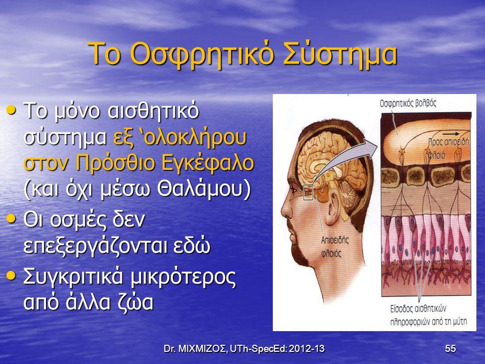 Το Οσφρητικό Σύστημα Το μόνο αισθητικό σύστημα εξ 'ολοκλήρου στον Πρόσθιο Εγκέφαλο (και όχι μέσω Θαλάμου) Το μόνο αισθητικό σύστημα εξ 'ολοκλήρου στον