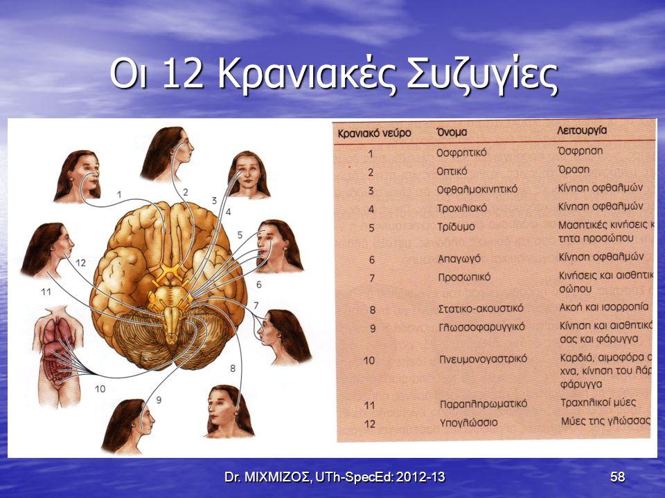 Οι 12 Κρανιακές Συζυγίες Dr. ΜΙΧΜΙΖΟΣ, UTh-SpecEd: 2012-13 58