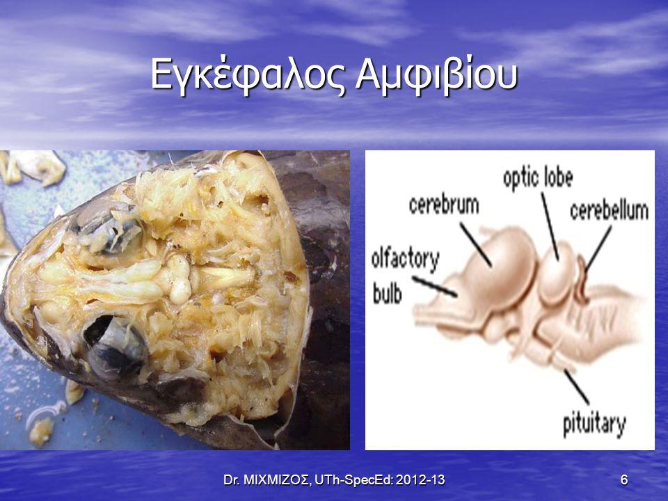 Εγκέφαλος Ερπετού Dr. ΜΙΧΜΙΖΟΣ, UTh-SpecEd: 2012-13 7