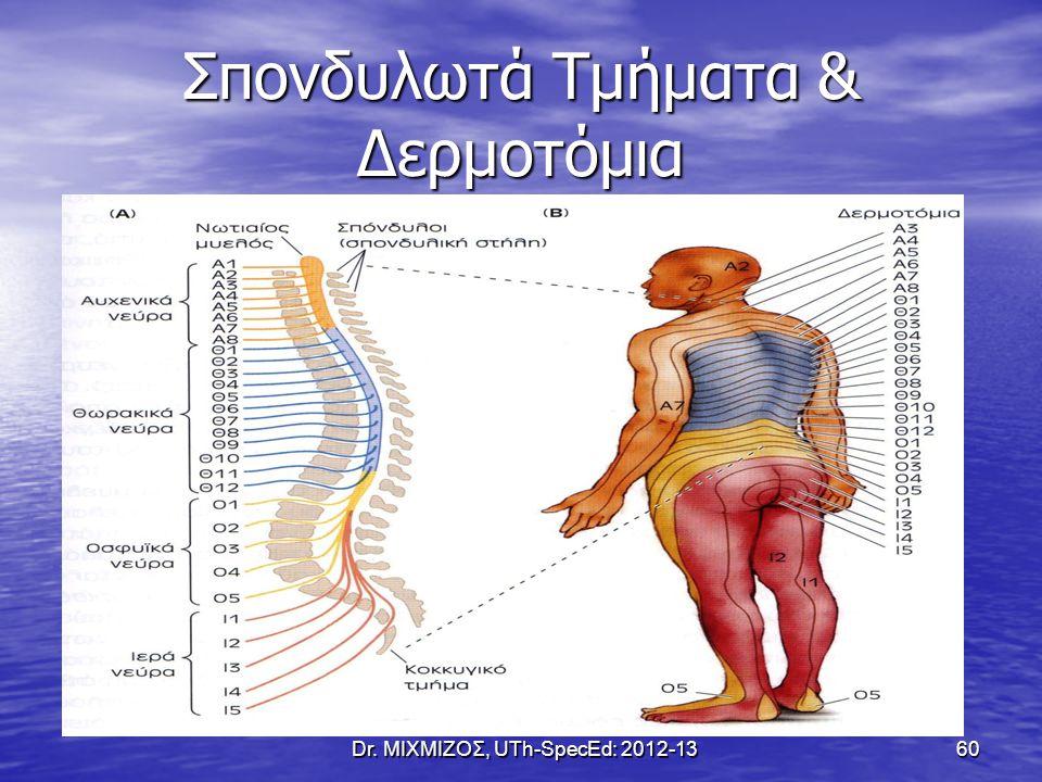 Σπονδυλωτά Τμήματα & Δερμοτόμια Dr. ΜΙΧΜΙΖΟΣ, UTh-SpecEd: 2012-13 60