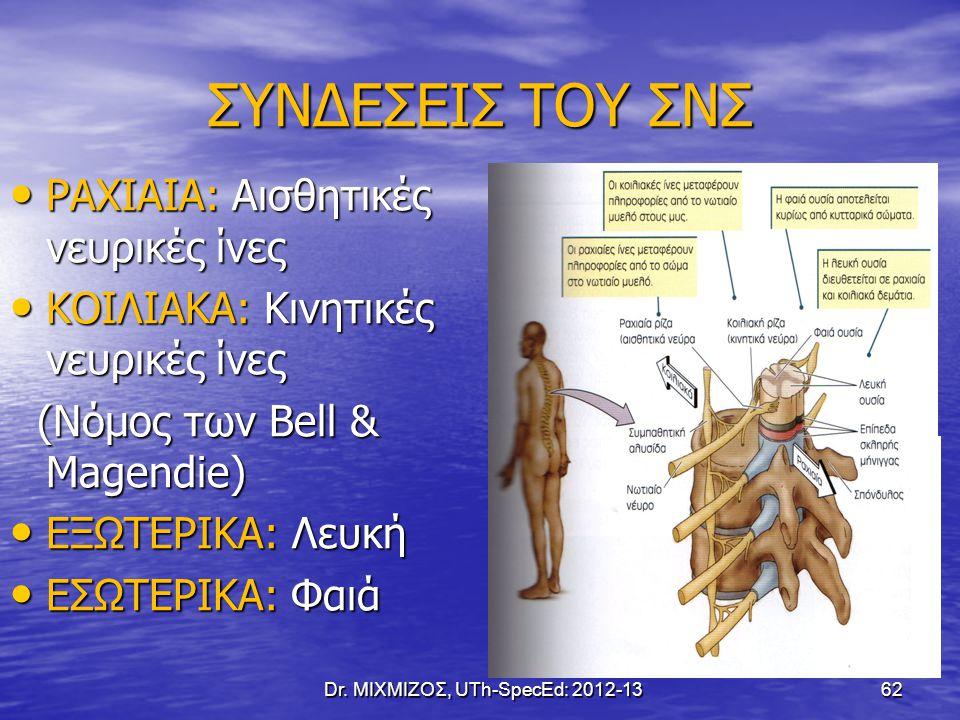 ΣΥΝΔΕΣΕΙΣ ΤΟΥ ΣΝΣ ΡΑΧΙΑΙΑ: Αισθητικές νευρικές ίνες ΡΑΧΙΑΙΑ: Αισθητικές νευρικές ίνες ΚΟΙΛΙΑΚΑ: Κινητικές νευρικές ίνες ΚΟΙΛΙΑΚΑ: Κινητικές νευρικές ί