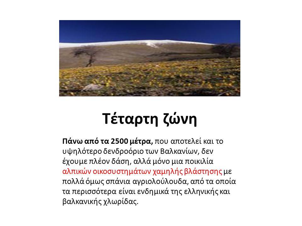 Τέταρτη ζώνη Πάνω από τα 2500 μέτρα, που αποτελεί και το υψηλότερο δενδροόριο των Βαλκανίων, δεν έχουμε πλέον δάση, αλλά μόνο μια ποικιλία αλπικών οικ