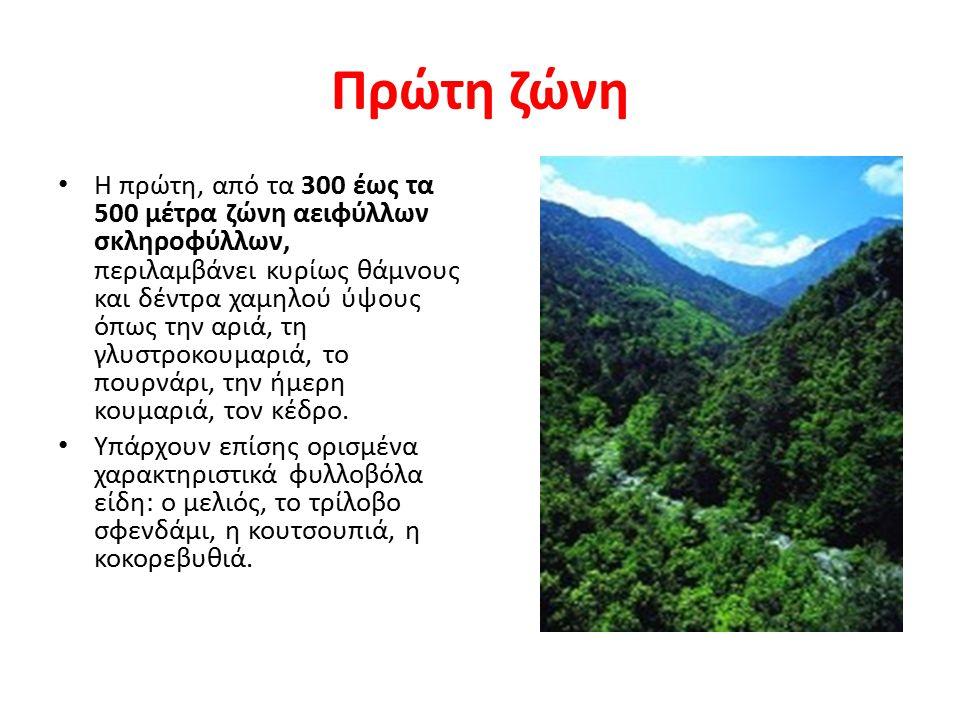 Πρώτη ζώνη Η πρώτη, από τα 300 έως τα 500 μέτρα ζώνη αειφύλλων σκληροφύλλων, περιλαμβάνει κυρίως θάμνους και δέντρα χαμηλού ύψους όπως την αριά, τη γλ