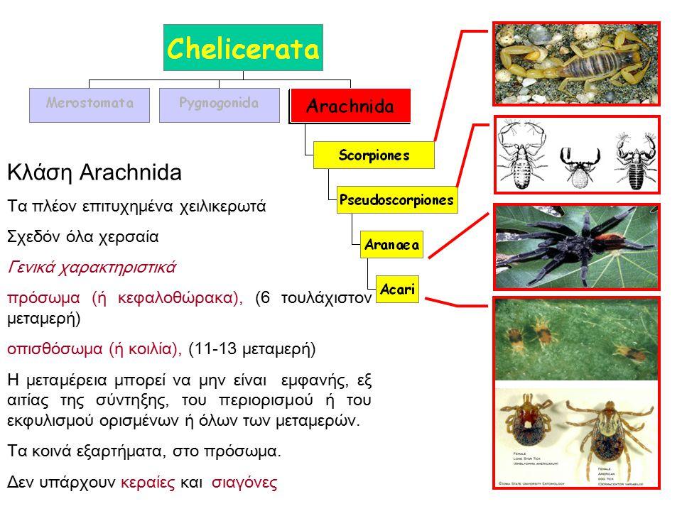 Κλάση Arachnida Τα πλέον επιτυχημένα χειλικερωτά Σχεδόν όλα χερσαία Γενικά χαρακτηριστικά πρόσωμα (ή κεφαλοθώρακα), (6 τουλάχιστον μεταμερή) οπισθόσωμ