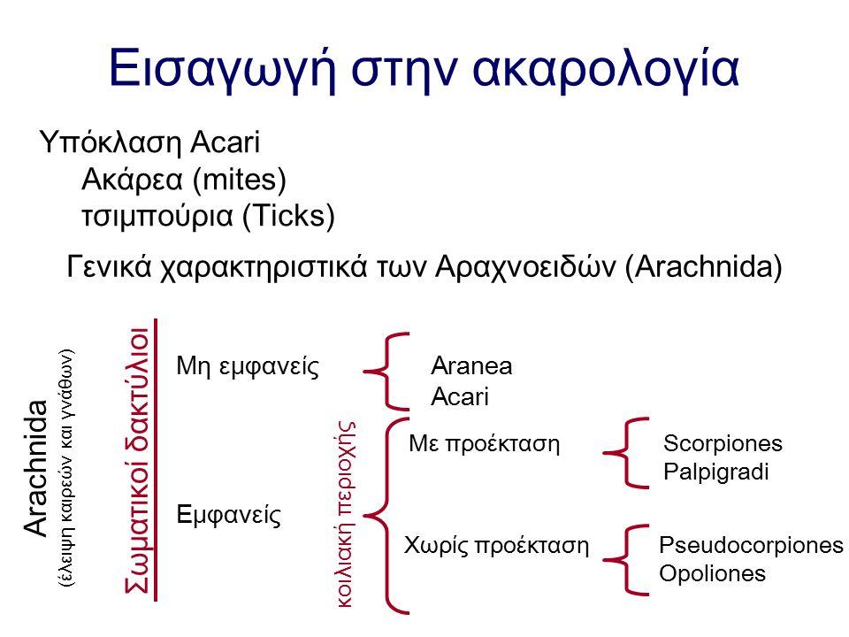 Εισαγωγή στην ακαρολογία Υπόκλαση Acari Ακάρεα (mites) τσιμπούρια (Ticks) Γενικά χαρακτηριστικά των Αραχνοειδών (Arachnida) Arachnida (έλειψη καιρεών