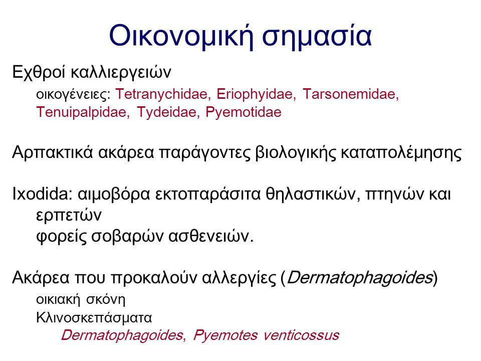 Οικονομική σημασία Εχθροί καλλιεργειών οικογένειες: Tetranychidae, Eriophyidae, Tarsonemidae, Tenuipalpidae, Tydeidae, Pyemotidae Αρπακτικά ακάρεα παρ