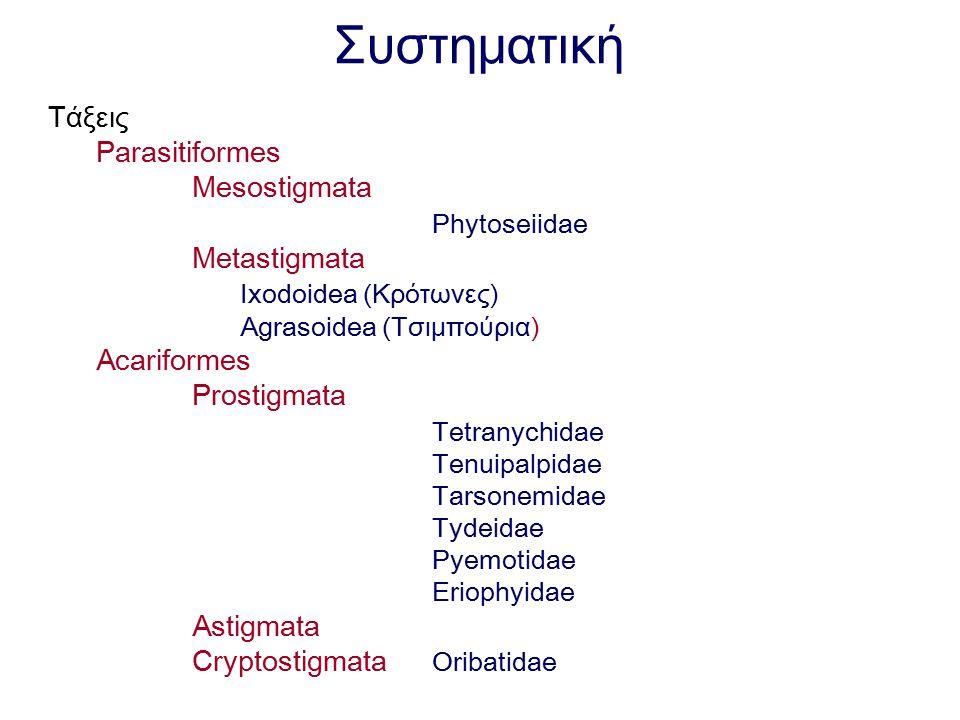Συστηματική Τάξεις Parasitiformes Mesostigmata Phytoseiidae Metastigmata Ixodoidea (Κρότωνες) Agrasoidea (Τσιμπούρια) Acariformes Prostigmata Tetranyc