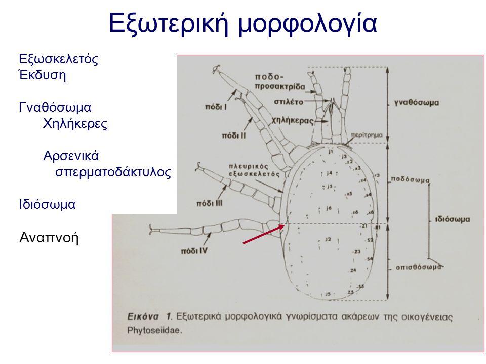 Εξωτερική μορφολογία Εξωσκελετός Έκδυση Γναθόσωμα Χηλήκερες Αρσενικά σπερματοδάκτυλος Ιδιόσωμα Αναπνοή