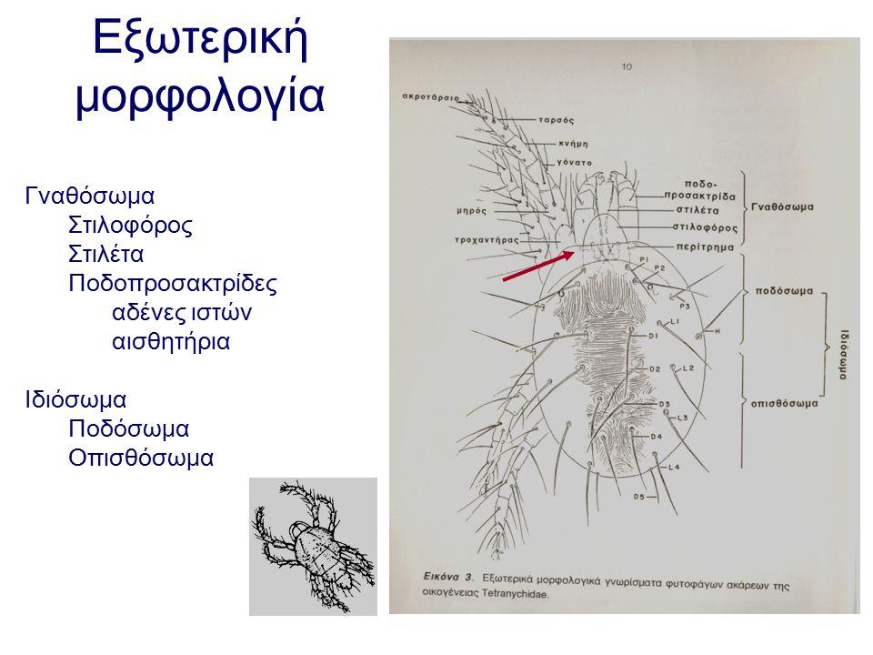 Εξωτερική μορφολογία Γναθόσωμα Στιλοφόρος Στιλέτα Ποδοπροσακτρίδες αδένες ιστών αισθητήρια Ιδιόσωμα Ποδόσωμα Οπισθόσωμα