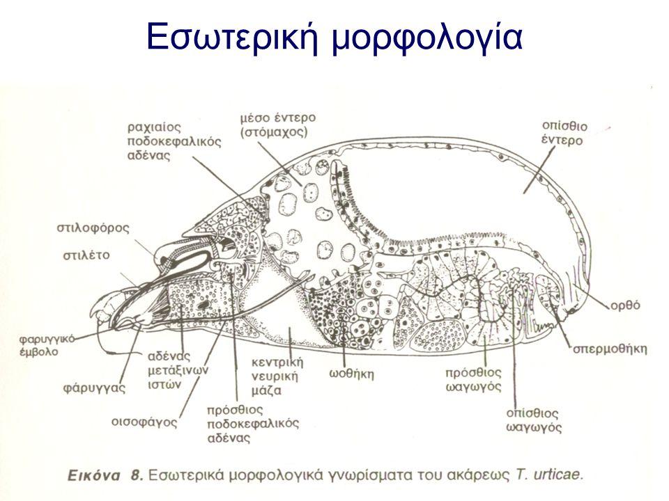 Εσωτερική μορφολογία