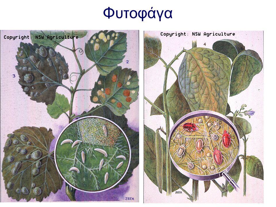 Φυτοφάγα