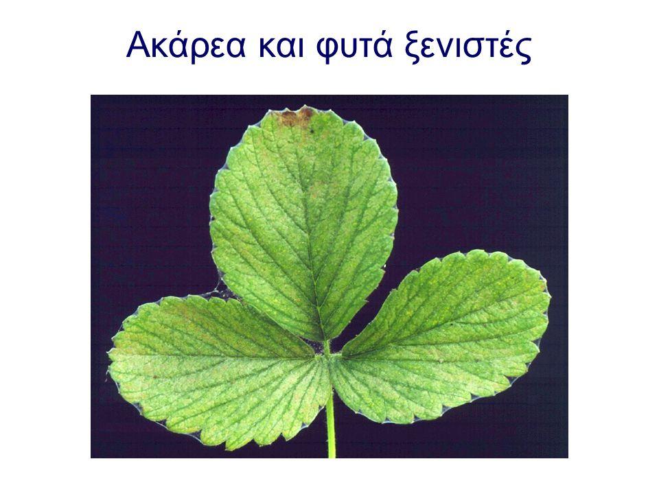 Ακάρεα και φυτά ξενιστές