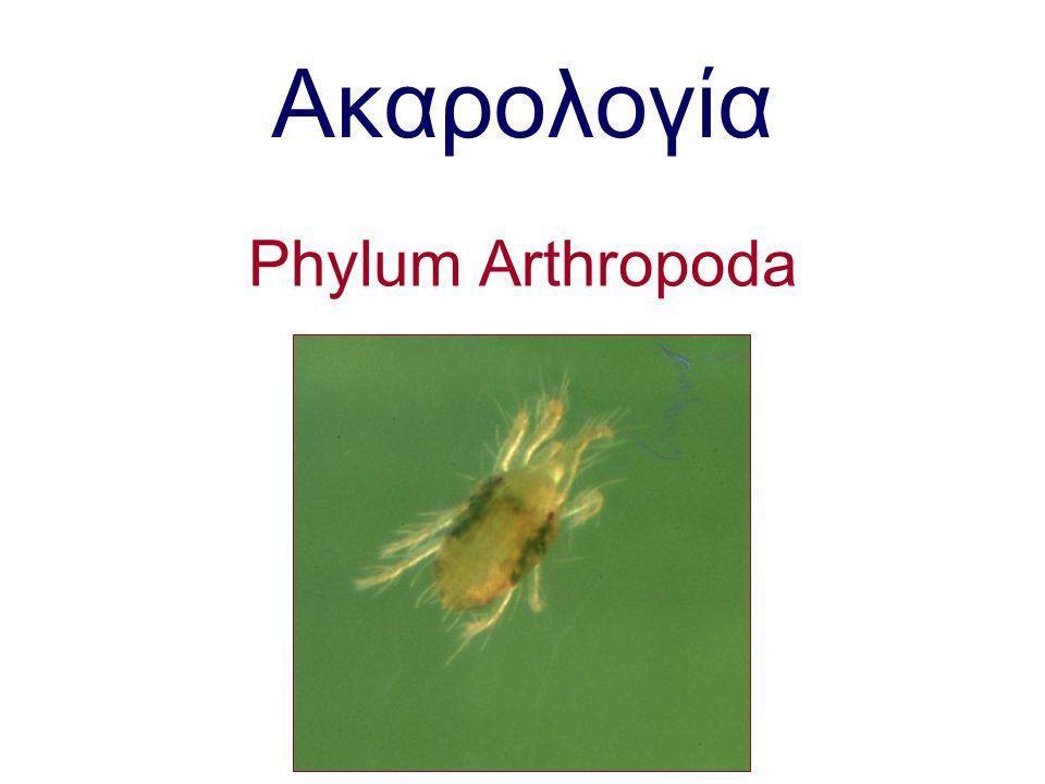 Ερωτήσεις Ποιες είναι οι χαρακτηριστικές ζημιές και συμπτώματα που προκαλούν τα ακάρεα της οικογένειας Tetranychidae και Eryophiidae Μορφολογικές διαφορές στα ακάρεα των οικογενειών Tetranychidae και Eryophiidae Ποιά είναι τα στάδια ανάπτυξης των ακάρεων της οικογένειας Tetranychidae και Phytoseidae Ποιά είναι η σημασία των ιστών στη βιολογία των ακάρεων Πως αντιδρούν τα φυτά στην προσβολή από τα ακάρεα.